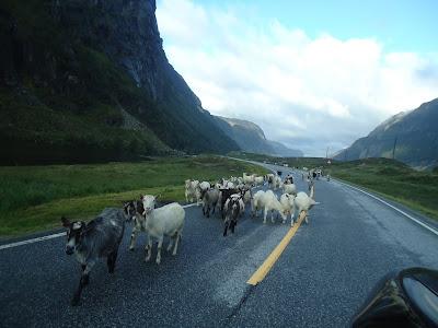 Fiordos noruegos en coche