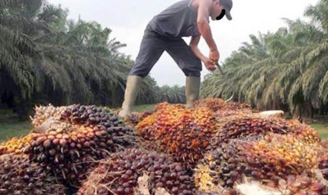 Indonesia Ajak Negara Produsen CPO Mengimplementasikan Penggunaan B20