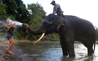 Imagen divertida de elefante