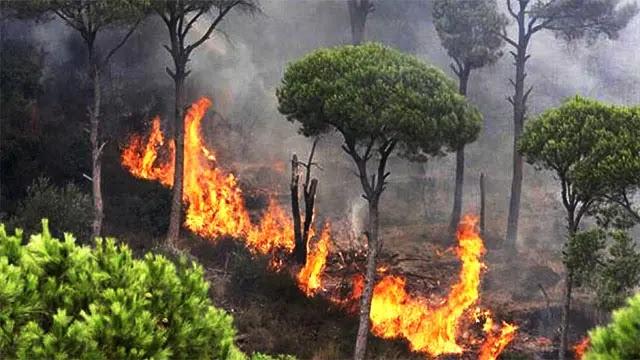 آخر الأخبار حول حريق غابات مدينة شفشاون الى حدود الساعة