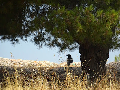 Ένα πουλί σε δέντρο στον λόφο του Φιλοπάππου