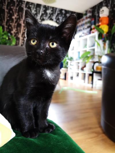Ripley chaton noir