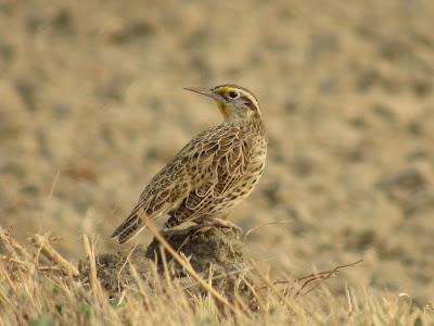Colusa National Wildlife Refuge California birding hotspot