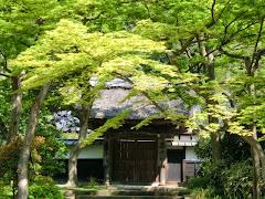 円覚寺の新緑