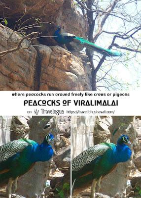 Peacocks of Viralimalai Murugan Temple Pinterest
