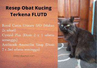 Resep-obat-flutd-untuk-kucing