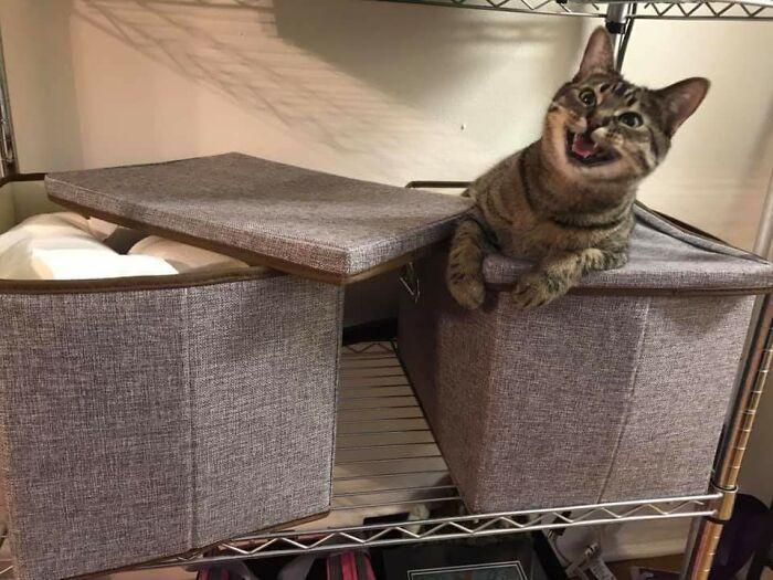 tingkah usil kucing (reddit.com/skank__hunt)