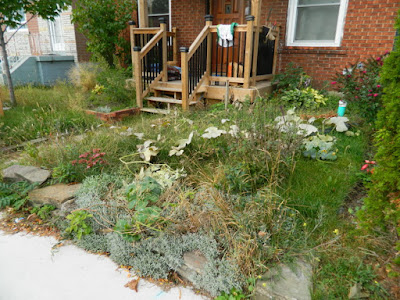 Toronto Front Garden Fall Cleanup Before in East York by Paul Jung Gardening Services--a Toronto Gardening Services Company