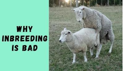 Why Inbreeding is bad for your farm