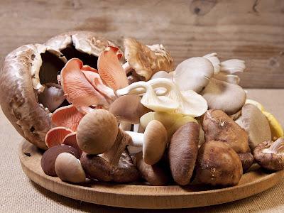 Mushroom Supplier Company in Firozabad