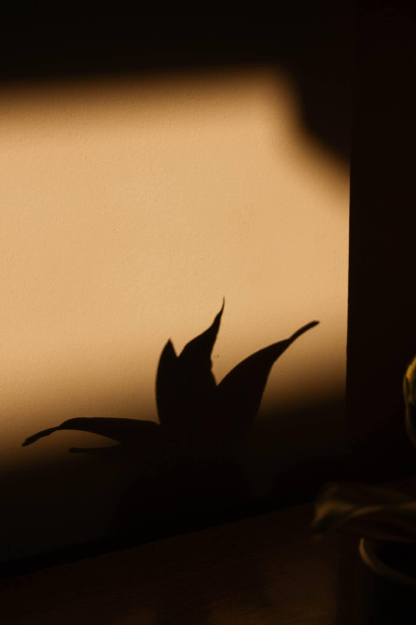 Melhor que ter quadros bonitos na parede cá de casa, é ter quadros personalizados com os nossos amigos de quatro patas. Escolhi, novamente, alguns posters e frames da Desenio. Não são todos personalizados, mas o que mais me conquistou foi o My Cat Personal Poster - um poster personalizável com o nosso animal de estimação (ilustração à escolha), num design minimalista e no qual podemos colocar data e texto.