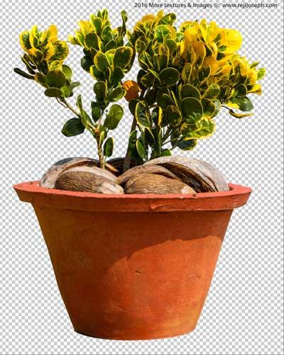 PNG Croton Garden Plant Texture 00002