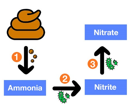How nitrogen cycle works
