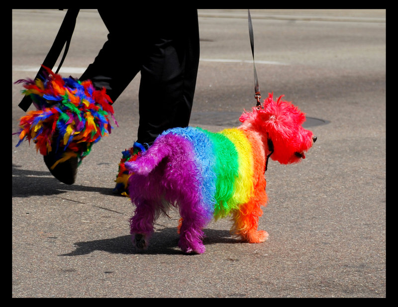 Image result for gay dog