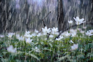 تفسير حلم رؤية المطر الغزير والبرق والرعد في المنام