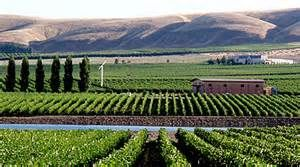 A Taste of #Washington State with Charles Smith Wines