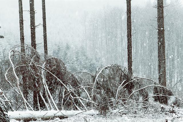 snowing, Schnee