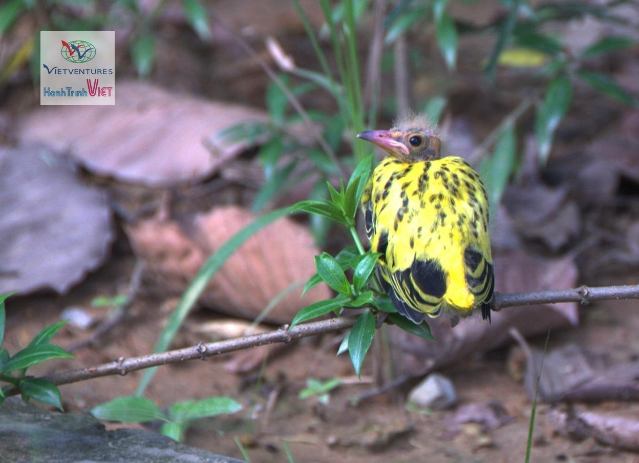 Chim non trong rừng Nam Cát Tiên