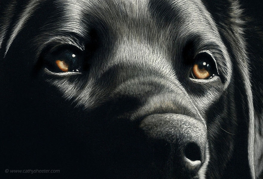 04-Labrador-Retriever-detail-Cathy-Sheeter-Hyper-Realistic-Scratchboard-Wild-Animal-Drawings-www-designstack-co