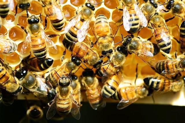 abejas extintas