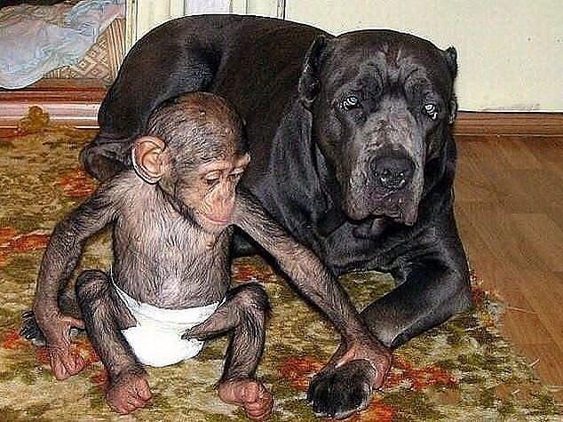 Чужих не бывает животные кормят чужих зверей собака и обезьяна