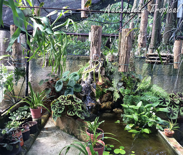 Estanque casero en un jardín proveyéndole un clima idóneo a numerosas plantas ornamentales