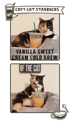 Pha chế 3 món đồ uống Starbucks sang chảnh tại nhà 3