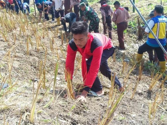 Gempa SMAM 8 Tanam Akar Wangi di Bantaran Kali Lamong