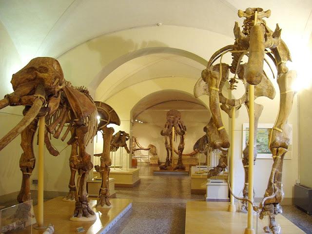 Museu de História Natural de Florença