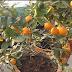 grow  beautiful orange plant