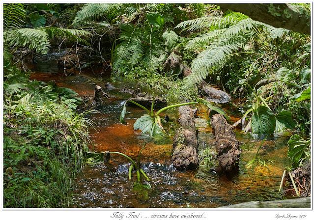 Tully Trail: ... streams have awakened...