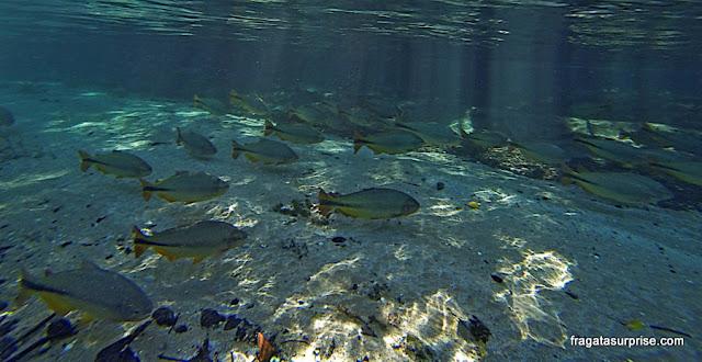 Férias de julho Brasil - mergulho em Bonito, Mato Grosso do Sul