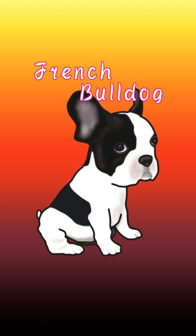 Funny French Bulldog