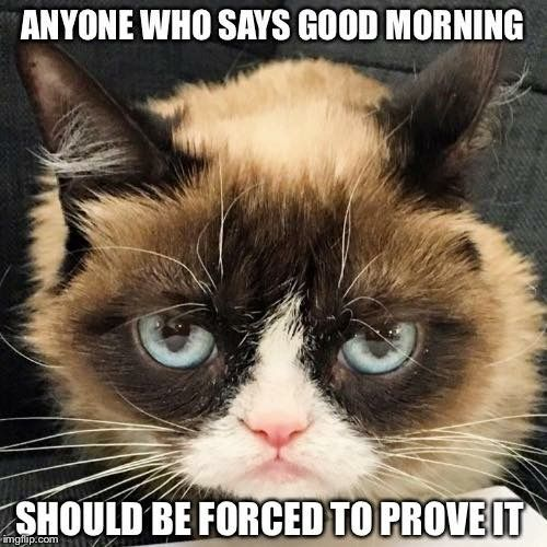 funny cat good morning memes