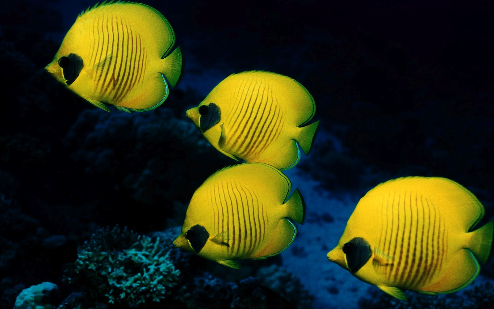 Cute Wallpapers Of All Kind Of Animals Best Wallpapers Collection Best Ocean Life Wallpapers