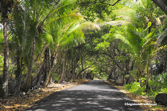 tree tunnel Puna Hawaii Big Island Trailblazer