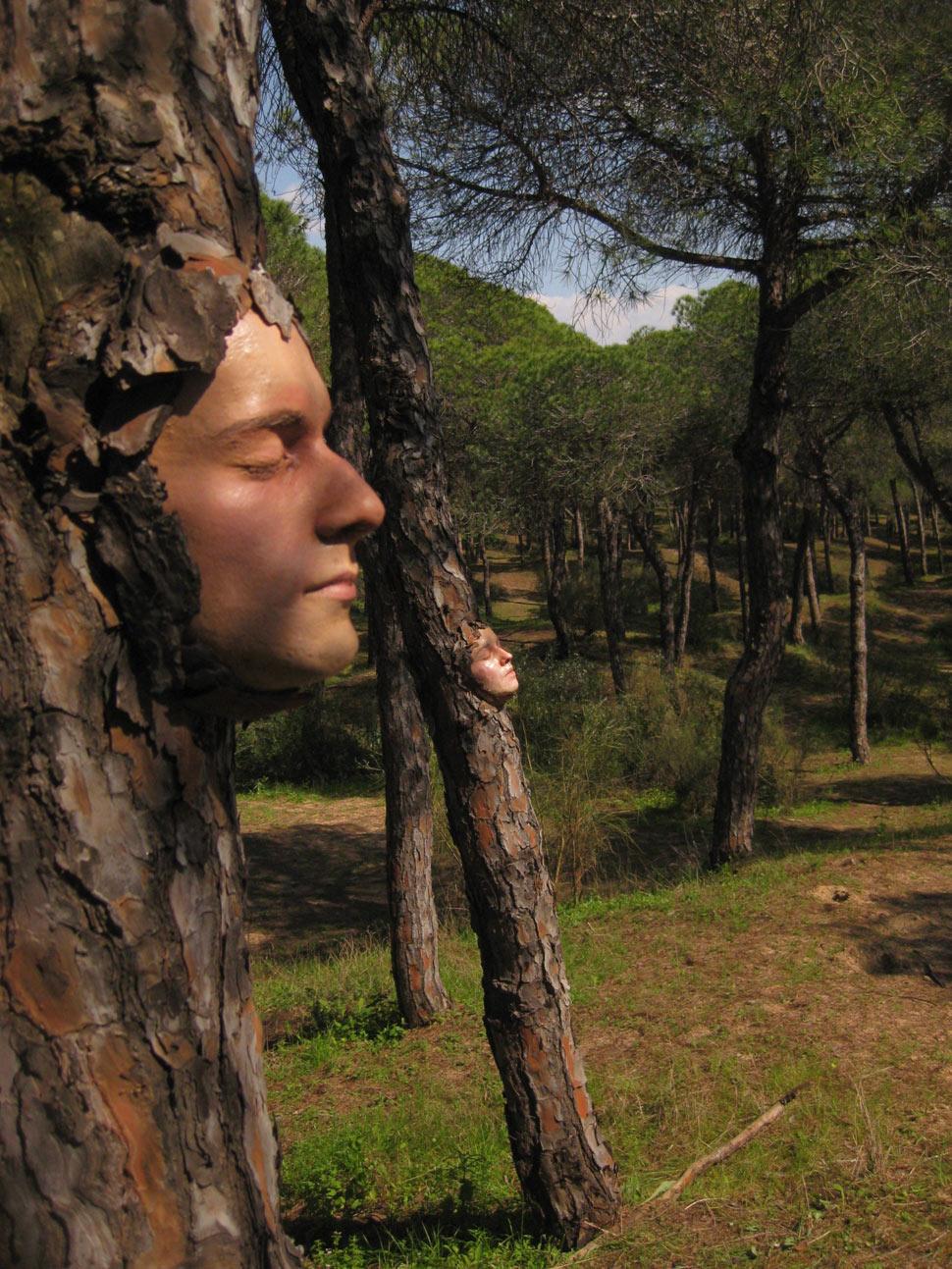 Stone Art Blog Tree Art For National Tree Week