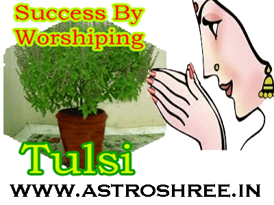 how to remove hurdles by worshiping tulsi plant as per astrology