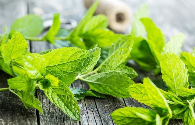 Mint Benefits Health Benefits Of Mint Or Pudina You Must Know