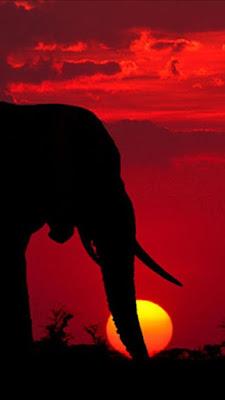 4k Ultra HD Elephant Wallpaper