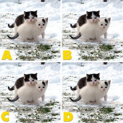 Which image is different? image 32