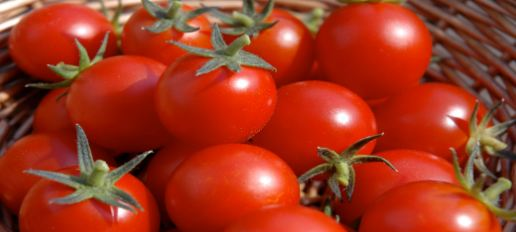 tomatoes cancer cure, tomato cancer causing,  tomatoes cause cancer, can tomatoes cause cancer,  tomatoes and breast cancer,