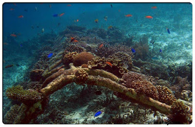 panorama bawah laut pulau gili trawangan