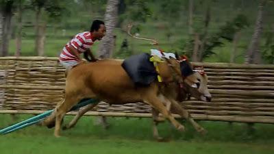 Jenis-jenis dan persebaran hewan atau fauna yang ada di Indonesia mempunyai kaitan dengan sejarah terbentuknya kepulauan Indonesia.