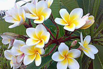 cara dan manfaat menjadi anggota yayasan bunga kemboja nurul sufitri travel lifestyle blogger review info