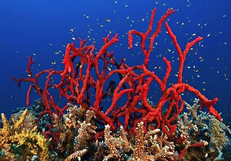 Ateş Mercanı büyüleyici görüntüsünün aksine tehlikeli bir bitkidir, kendisine dokunanı anında sokmaktadır.