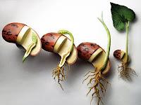Pertumbuhan Dan Perkembangan Pada Tumbuhan Serta Faktor Yang Mempengaruhinya-Biologi Kelas XII IPA SMA-MA