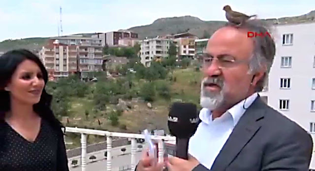 A Screen Capture From The Video Below: A Bird Lands On A Reporter's Head In Turkey
