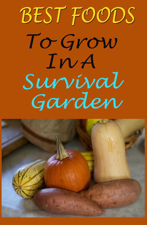 Best foods to grow in a survival garden