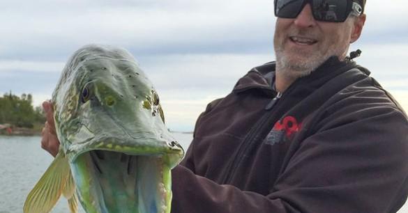 Misteri Ikan Jackfish Yang Bercahaya